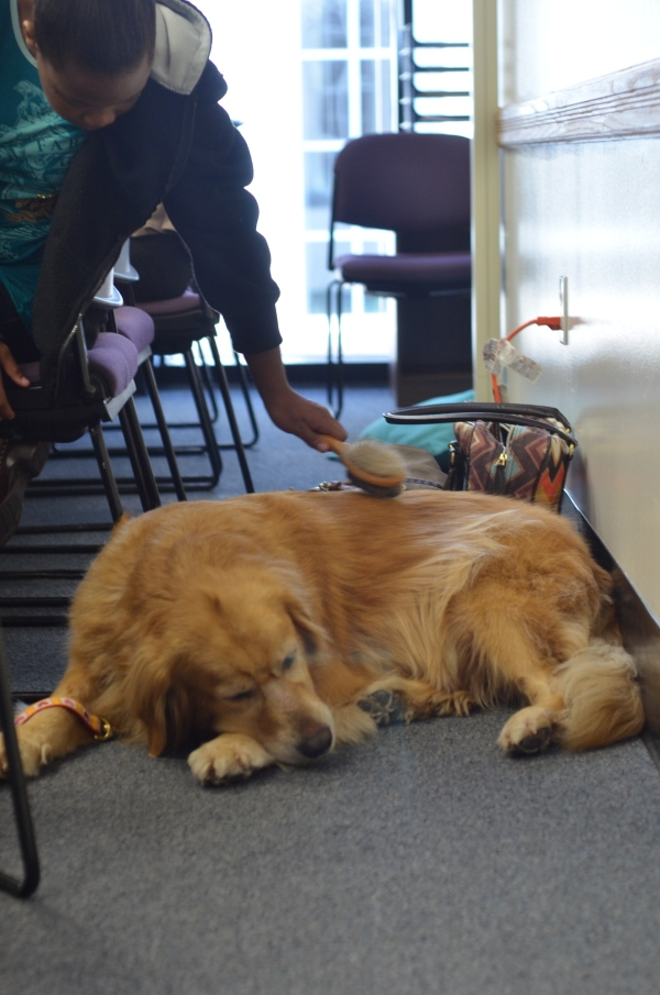 Orla, the Therapy Dog