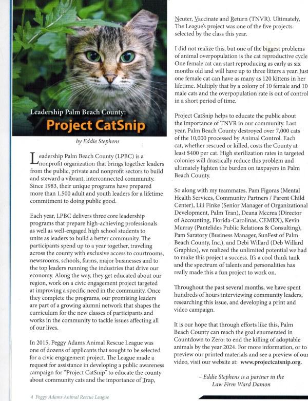 catsnip article jpg